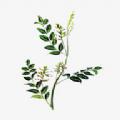 中药植物百科 v2.0.1安卓版