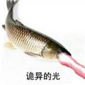 鱼诡异的目光表情包高清版